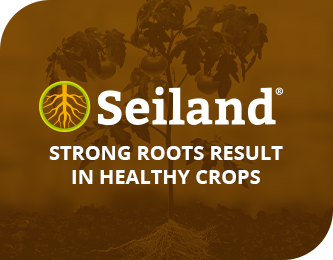 Strong roots result in healthy crops