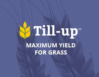 Maximum yield for grass