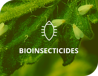 Bioinsecticides