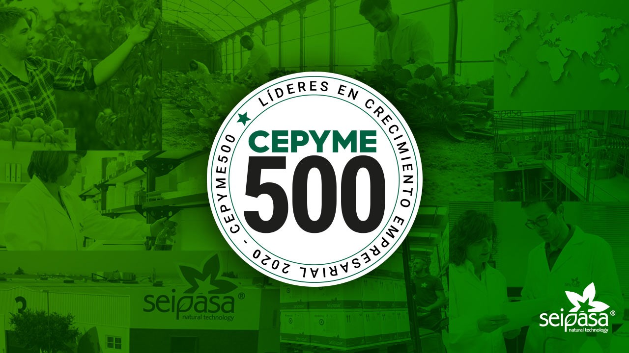 Seipasa consolidates its position in the Cepyme500 ranking